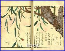 1920 Honzo Zufu Kyobokurui Plants Picture Japanese Original Woodblock Print Book