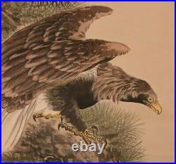 HAWK HANGING SCROLL JAPANESE PAINTING From JAPAN OLD PINE PICTURE KAKEJIKU e607