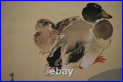 JAPANESE PAINTING Bird HANGING SCROLL JAPAN Picture DUCK ANTIQUE Old Plum 205m
