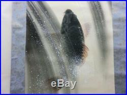 JAPANESE PAINTING HANGING SCROLL JAPAN CARP CASCADE Waterfall VINTAGE d338