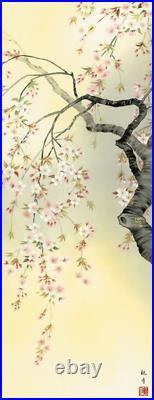 Japanese Painting Hanging Scroll Sakura in Full Bloom Cherry Blossoms